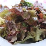 Garden Planter 'Salad Bowl Red' Lettuce, Fresh Herbs, Lemon Poppyseed Vinaigrette