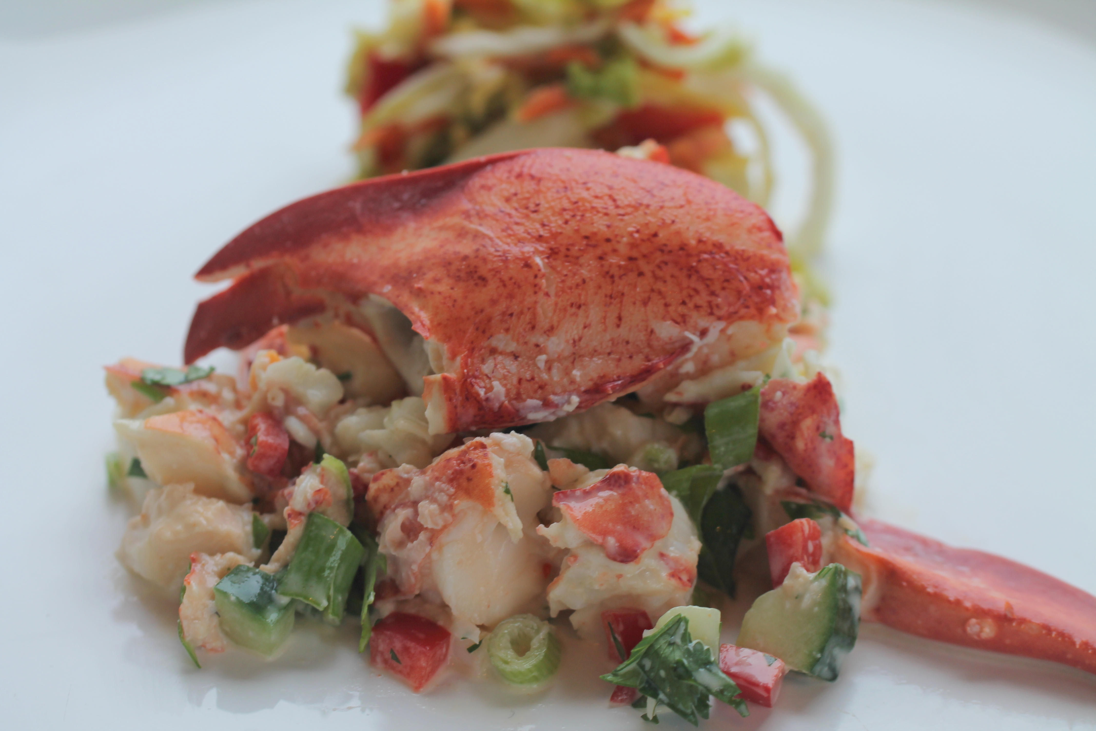 Lobster Salad, Lemongrass Infused Mayonnaise