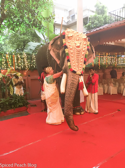 Feeding bananas to the elephant at Sneha's Sangeeth