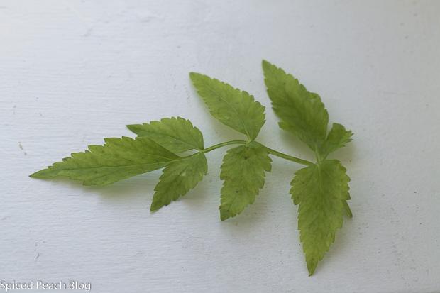 Korean Watercress Leaf