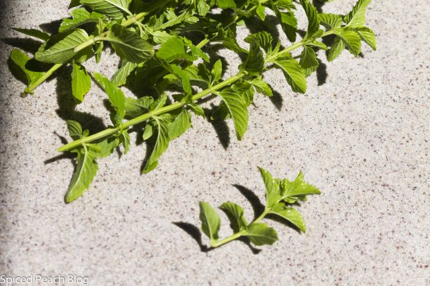long stems of fresh mint
