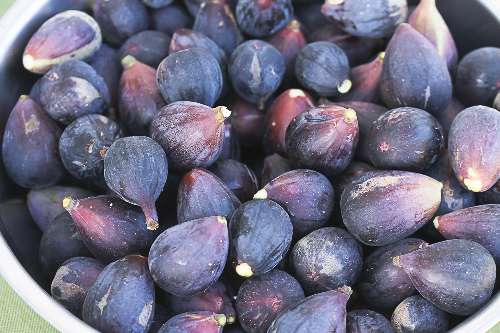 fresh-picked-figs